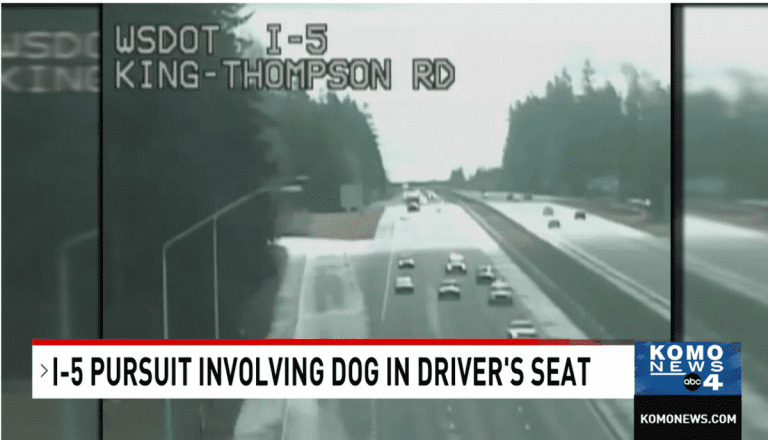 Man arrested after trying to teach his dog how to drive at 100mph